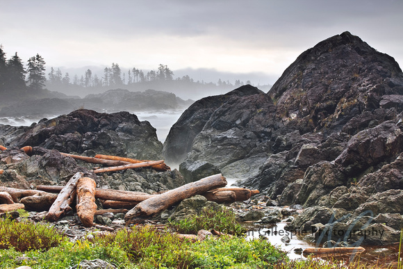Driftwood logs, Pacific Coast