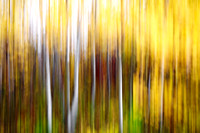 Aspen Trees, motion-blurred abstract, Assiniboine Forest, Winnipeg, Manitoba, Canada
